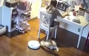 Doggo Gets Attacked By A Vacuum Robot