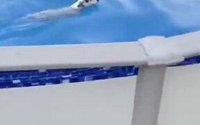 Doggo Executes Cool Exit From Pool