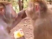 Monkey Makes It's Friend Watch As It Eats