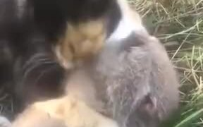 Nice Friendship Between A Rat And A Cat