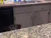 Dog Never Gives Up Getting Food From The Table