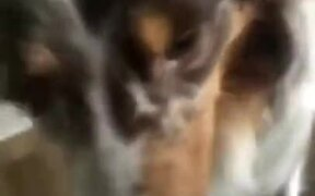 Mother Dog Brings Her Puppies To Her Owner