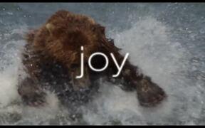 Bears Trailer