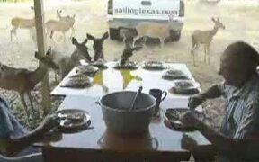 Deer For Breakfast In Texas