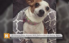 3D Printing Helps Animals