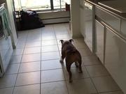 The Moonwalking Dog