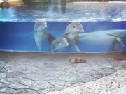 Dolphins Are Watching Squirrels