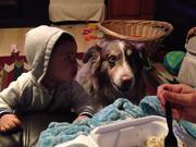 Dog Saying Mama