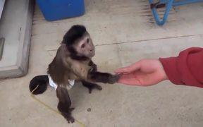 Monkey Using a Vending Machine