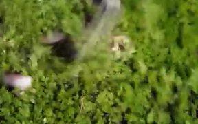 Peek-a-Boo Bush Of Kittens