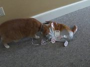 Cat Vs Cat Balloon