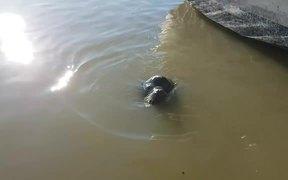 Sea Lion Drags Girl