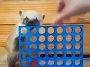 Coati Learns To Play Connect 4