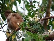 Closeup of a Bird