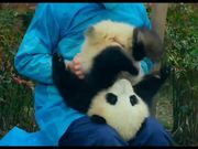 Pandas Official Trailer