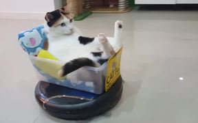 The Roomba Riding Cat