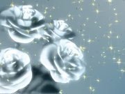 Flowers Rotating