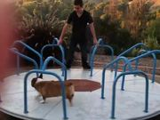 Corgi Loves The Carousel