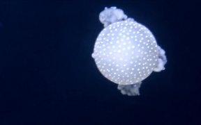 Jellyfish in a Tank