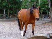 Dusty Horse
