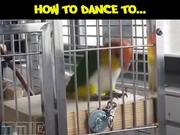 How To Dance To