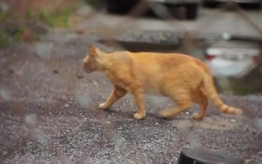 Handheld Street Cat