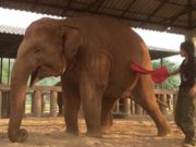 Elephant Lullaby