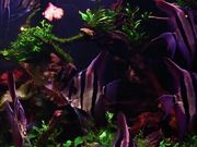 Angel Fish in Tank