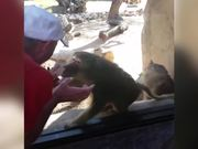 Baboon Is Amazed By Magic Trick