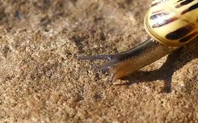 Moving Yellow Snail