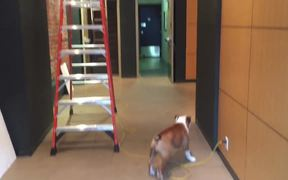 This Dog Is Scared Of Ladders