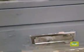 This Cat Really Hates The Mailman
