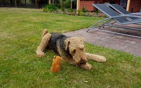 Dog Vs Talking Toy