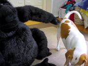 Dog Falls In Love With Stuffed Gorill