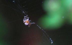 Spider Spinning Its Prey