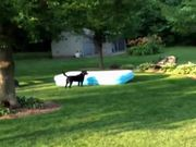 Dog Runs Away With Pool