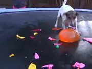 Dog Vs Water Balloons