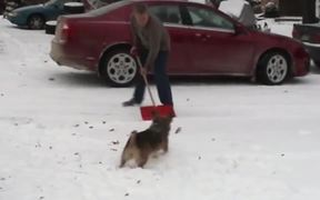Dogs Excited For The Snow