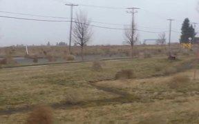 Tumbleweed Migration