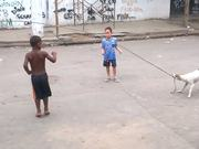 Dog Playing Jump Rope