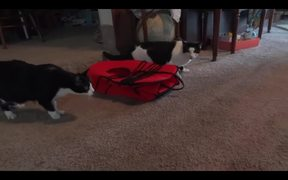 Scared Of A Stuff Bobcat