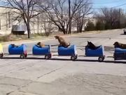 The Dog Train