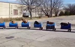 The Dog Train