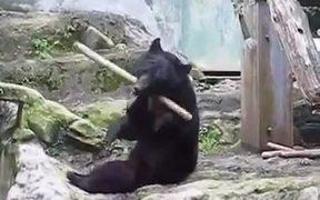 The Ninja Bear