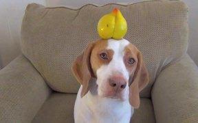 This Dog Balances Everything
