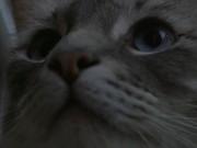 Closeup of Cat UHD
