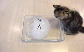 Cats Enjoying An Ice Ball