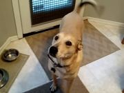 Dog Is Excited For Food