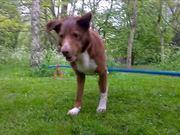Handstand On Tightrope Dog