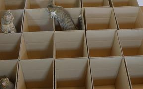 9 Cats With 20 Boxes